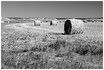 Hay rolls. South Dakota, USA (black and white)