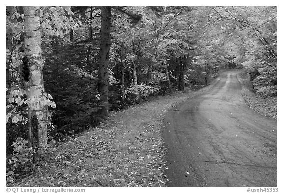 Rural road in autumn, White Mountain National Forest. New Hampshire, USA (black and white)