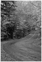 Rural road in the fall, White Mountain National Forest. New Hampshire, USA ( black and white)