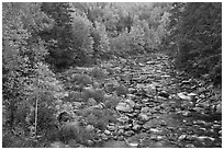 River in autumn, White Mountain National Forest. New Hampshire, USA (black and white)