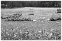 Frozen pond. Walpole, New Hampshire, USA (black and white)