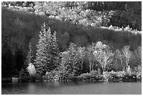 Trees on rocky islet, White Mountain National Forest. New Hampshire, USA (black and white)