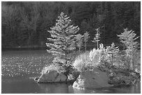 Trees on small rocky islet, Beaver Pond, Kinsman Notch. New Hampshire, USA (black and white)