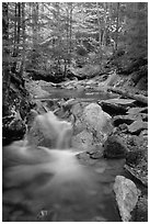 Stream in fall, Franconia Notch State Park. New Hampshire, USA (black and white)