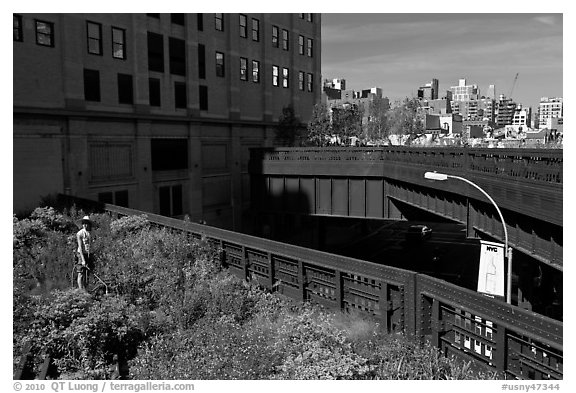 Garden on the High Line. NYC, New York, USA (black and white)