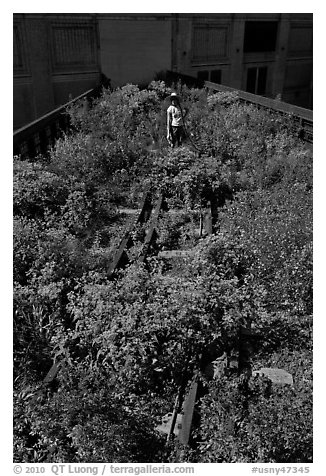 Gardener working on the High Line. NYC, New York, USA (black and white)