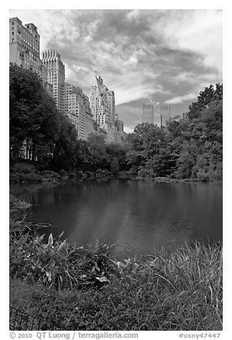 Central Park pond and nearby buildings. NYC, New York, USA (black and white)