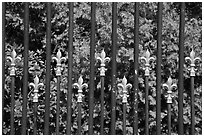Fence with the French Fleur de Lys royalty emblem. Newport, Rhode Island, USA (black and white)