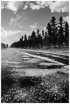 Highway after hailstorm, Black Hills National Forest. Black Hills, South Dakota, USA (black and white)