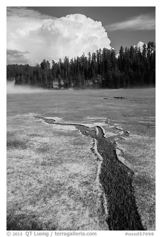 Meadow with hailstones, hail storm clearing, Black Hills National Forest. Black Hills, South Dakota, USA (black and white)