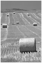 Rolls of hay in summer. South Dakota, USA ( black and white)