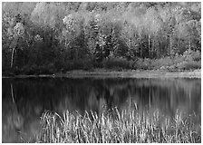 Hill in fall colors reflected in a pond. Vermont, New England, USA (black and white)