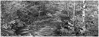 Autumn forest landscape with stream. Vermont, New England, USA (Panoramic black and white)
