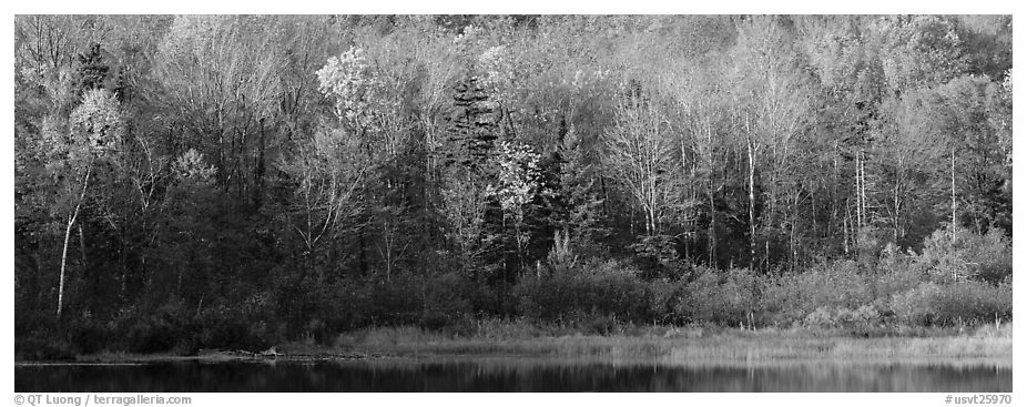 Forest edge in autumn. Vermont, New England, USA (black and white)