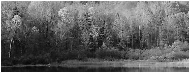Forest edge in autumn. Vermont, New England, USA (Panoramic black and white)