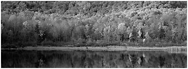 Hillside forest and pond in the fall. Vermont, New England, USA (Panoramic black and white)