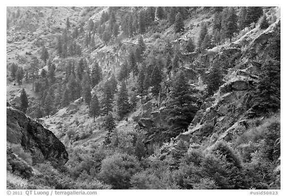 Side canyon with trees. Hells Canyon National Recreation Area, Idaho and Oregon, USA (black and white)