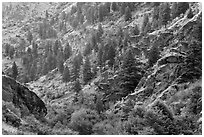 Side canyon with trees. Hells Canyon National Recreation Area, Idaho and Oregon, USA ( black and white)