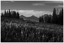 Late summer wildflowers and mountains, Face Trail. Jedediah Smith Wilderness,  Caribou-Targhee National Forest, Idaho, USA ( black and white)