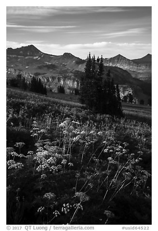 Cow parsnip and mountains, Face Trail. Jedediah Smith Wilderness,  Caribou-Targhee National Forest, Idaho, USA (black and white)