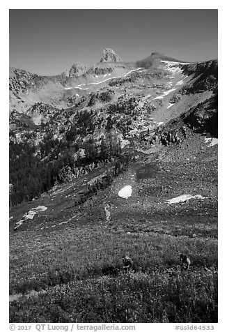 Hikers in wildflowers meadows, Huckleberry Trail. Jedediah Smith Wilderness,  Caribou-Targhee National Forest, Idaho, USA (black and white)