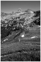 Hikers in wildflowers meadows, Huckleberry Trail. Jedediah Smith Wilderness,  Caribou-Targhee National Forest, Idaho, USA ( black and white)