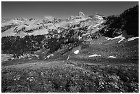 Wildflowers, Table Mountain ridge, and Tetons peeking. Jedediah Smith Wilderness,  Caribou-Targhee National Forest, Idaho, USA ( black and white)