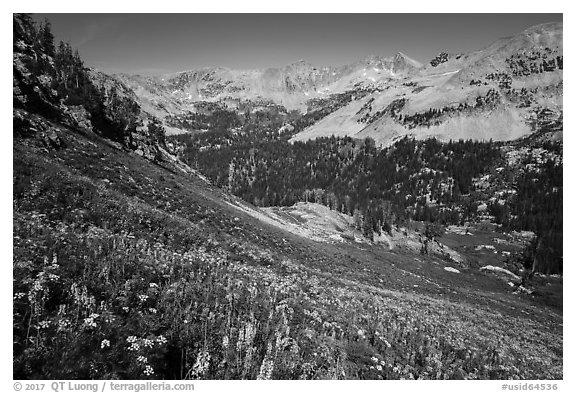 Basin with wildflowers, Huckleberry Trail. Jedediah Smith Wilderness,  Caribou-Targhee National Forest, Idaho, USA (black and white)