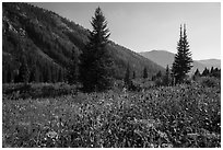 Meadow in late summer, Huckleberry Trail. Jedediah Smith Wilderness,  Caribou-Targhee National Forest, Idaho, USA ( black and white)