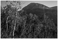 Aspen and mountain in late summer, Huckleberry Trail. Jedediah Smith Wilderness,  Caribou-Targhee National Forest, Idaho, USA ( black and white)