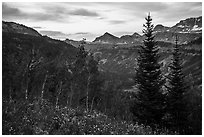 Wildflowers and valley and sunrise, Face Trail. Jedediah Smith Wilderness,  Caribou-Targhee National Forest, Idaho, USA ( black and white)