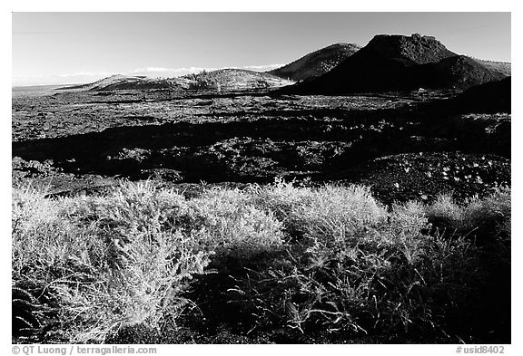 Brush in lava field, Craters of the Moon National Monument. Idaho, USA (black and white)