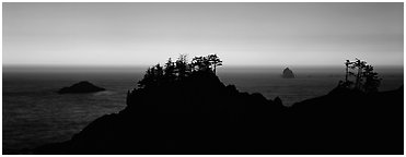 Sunset seascape beyond ridge of trees. Oregon, USA (Panoramic black and white)