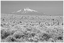 Sagebrush desert and Mt Hood. Oregon, USA ( black and white)