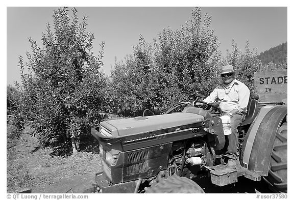 Man on tractor in orchard. Oregon, USA (black and white)