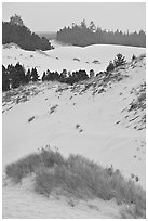 Grasses, trees, and dunes, Oregon Dunes National Recreation Area. Oregon, USA (black and white)