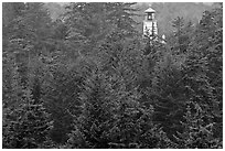 Spruce-Hemlock forest and Umpqua River Lighthouse. Oregon, USA ( black and white)