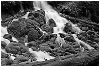 Mossy rocks and stream, North Umpqua river. Oregon, USA ( black and white)