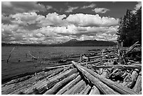 Crane Praire Reservoir and logs. Oregon, USA ( black and white)