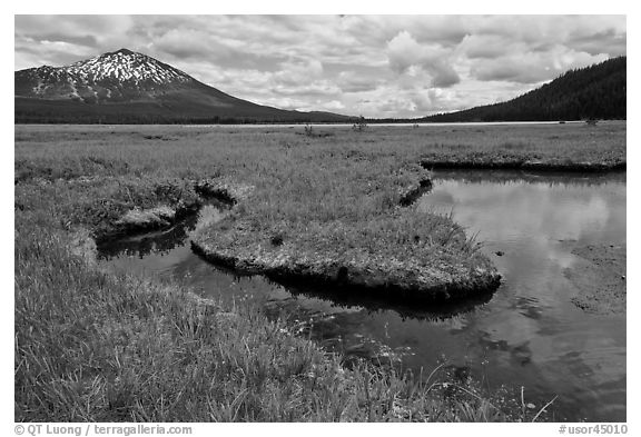 Meadow, South Sister, Deschutes National Forest. Oregon, USA (black and white)