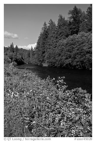McKenzie River. Oregon, USA (black and white)