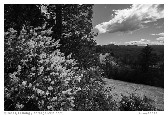 Blooms and Siskiyou Mountains. Cascade Siskiyou National Monument, Oregon, USA (black and white)