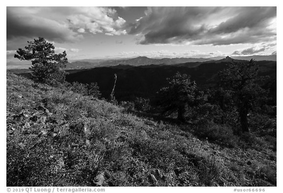 Sunny meadow with wildflowers and distant Pilot Rock. Cascade Siskiyou National Monument, Oregon, USA (black and white)