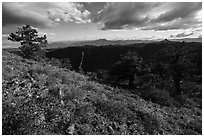 Sunny meadow with wildflowers and distant Pilot Rock. Cascade Siskiyou National Monument, Oregon, USA ( black and white)