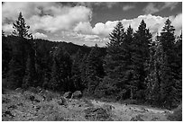 Clearing with distant view of Pilot Rock. Cascade Siskiyou National Monument, Oregon, USA ( black and white)