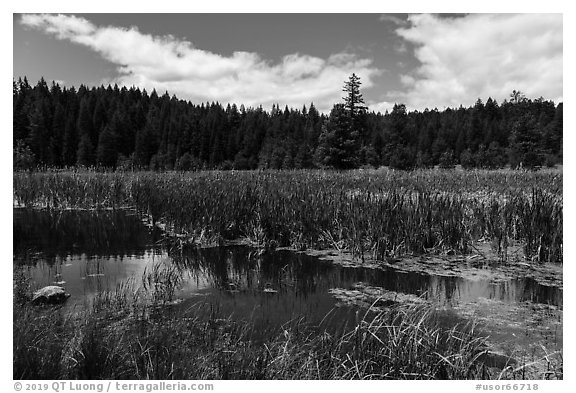 Wetlands near Little Hyatt Reservoir. Cascade Siskiyou National Monument, Oregon, USA (black and white)