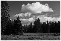Meadow and clouds near Grizzly Peak. Cascade Siskiyou National Monument, Oregon, USA ( black and white)