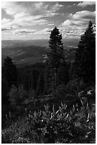 Corn Lilly and view near Grizzly Peak. Cascade Siskiyou National Monument, Oregon, USA ( black and white)