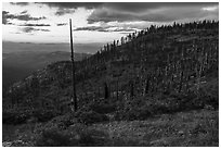Hillside with burned trees, Grizzly Peak. Cascade Siskiyou National Monument, Oregon, USA ( black and white)