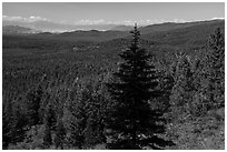 Fir in shadow and mixed conifer forest, Surveyor Mountains. Cascade Siskiyou National Monument, Oregon, USA ( black and white)